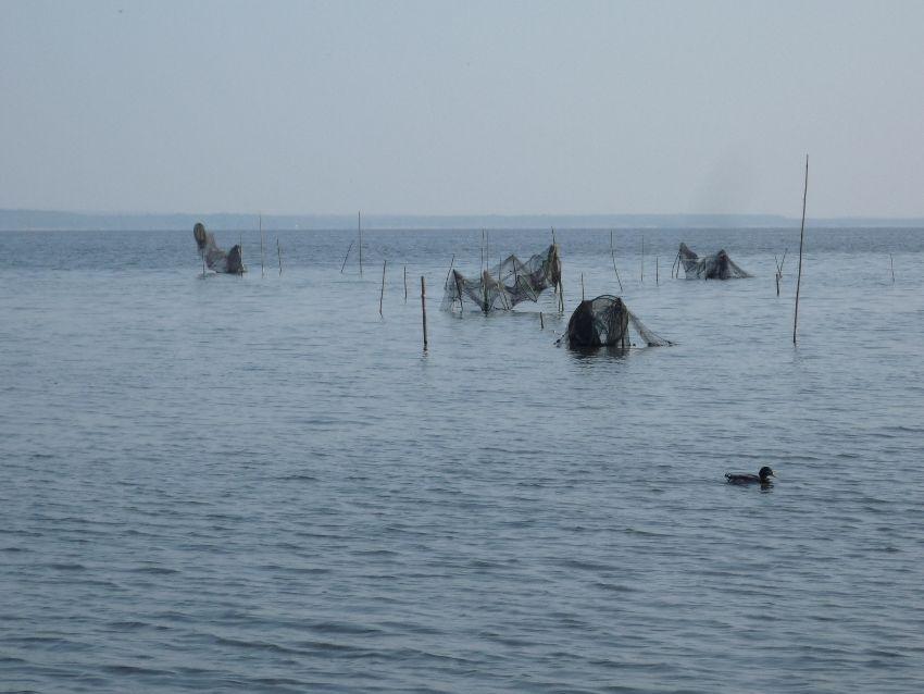 Segeln auf dem Steinhuder Meer 2
